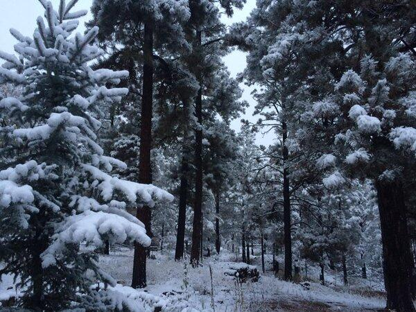 ¡Flagstaff amaneció blanca!