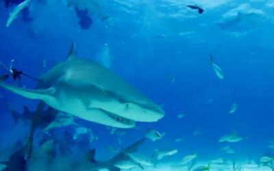 Tiburones-Huella