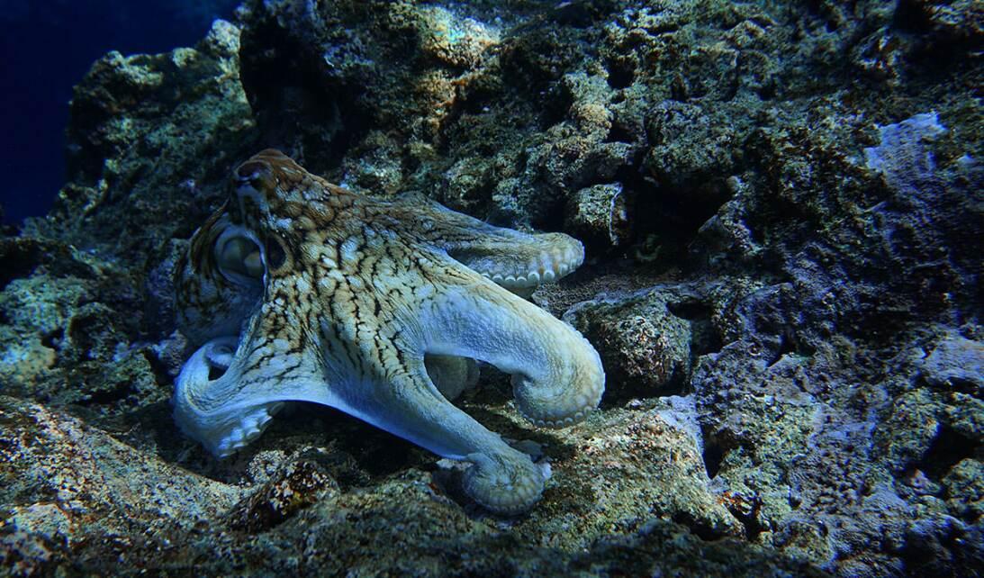 Las 10 nuevas imágenes que retratan uno de los rincones del océano más r...