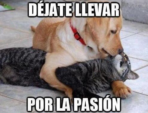 """""""Déjate llevar por la pasión""""."""