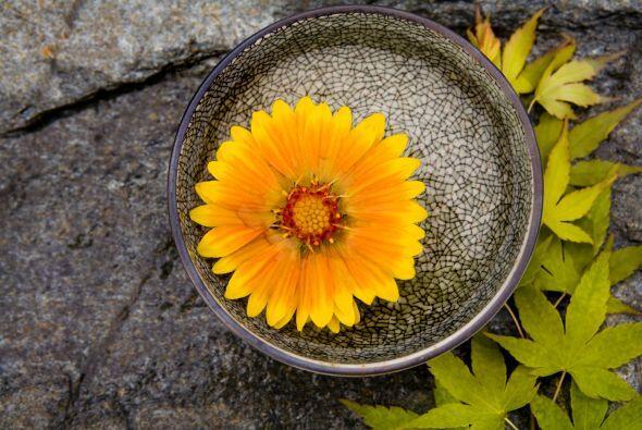 No hay un jardín japonés típico, ni materiales que sí deban estar para q...