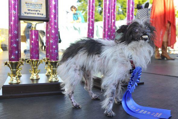 El premio lo donará a los perros callejeros que han sido maltratados com...