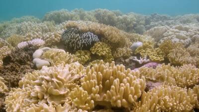 El mundo podría quedarse sin arrecifes en menos de lo que imaginas