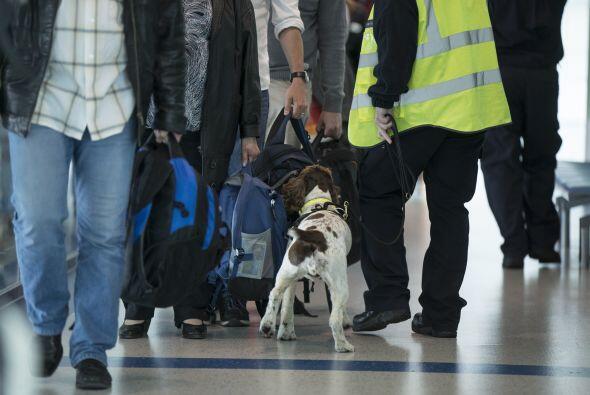Las encontró en un vuelo que iba de Jamaica a Londres.