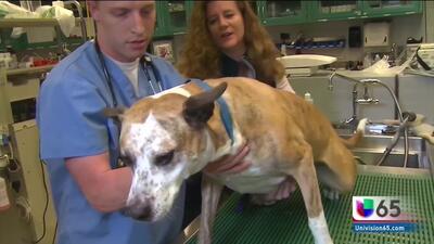 Estudio señala que adictos son capaces de maltratar a sus mascotas para obtener drogas