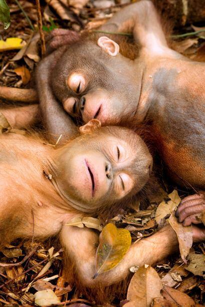 La organización International Animal Rescue (IAR) es la responsable de r...