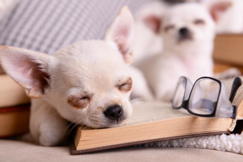 perritos soñando
