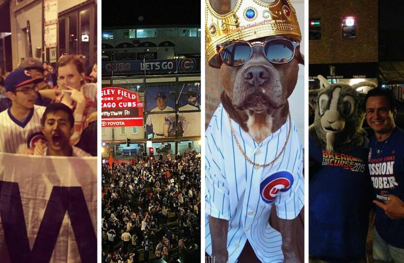 Fanáticos de los Cubs demostraron su pasión por el equipo...