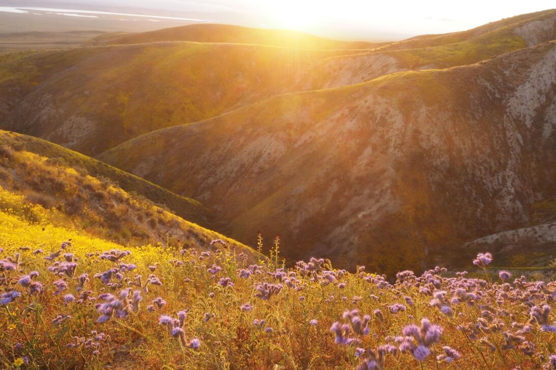 Carrizo Plain (California)