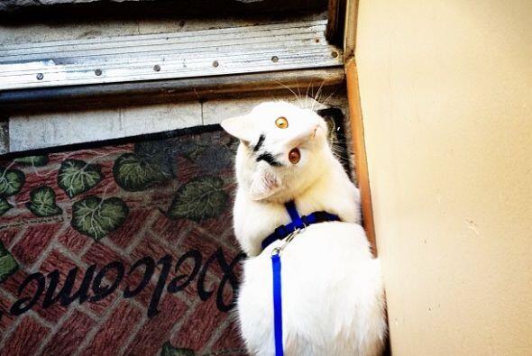 Sam no sólo es un gato muy fotogénico, también disf...