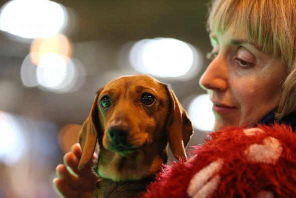 Para un perro no hay mejor premio que estar con su dueño.