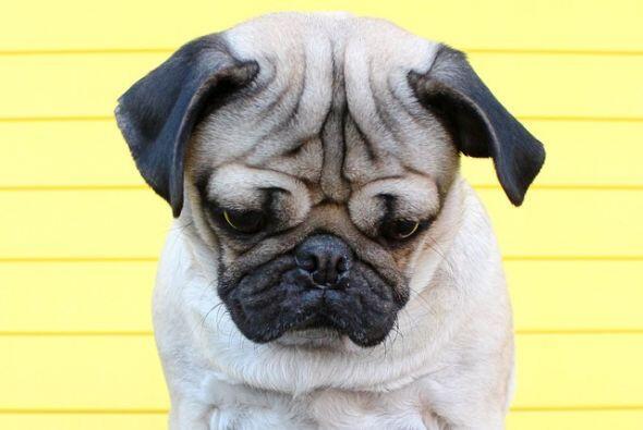 Doug, el famoso perrito de Nashville, Estados Unidos, realizó su mejor e...