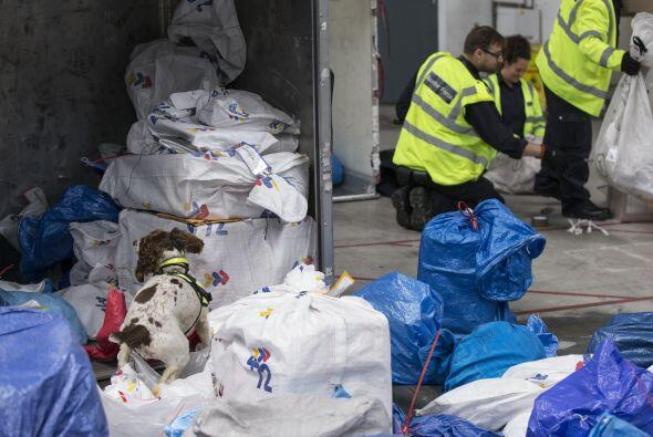 Algunos perros de seguridad en el Reino Unido, han encontrado droga ileg...