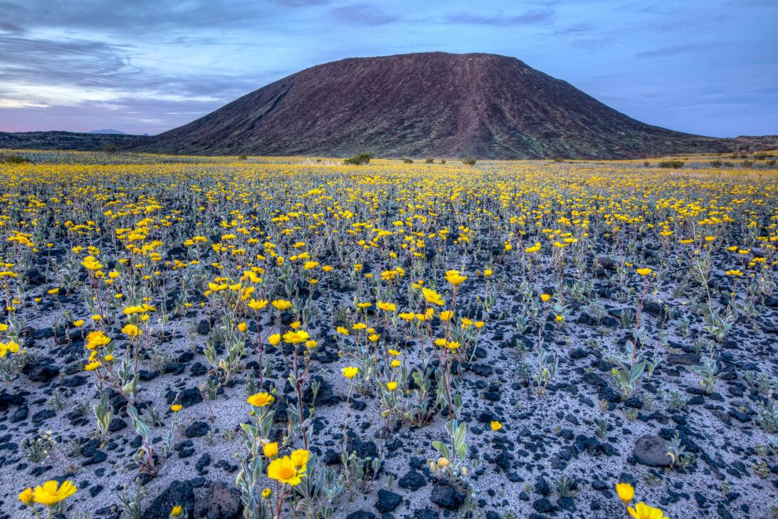 Mojave Trails (California)