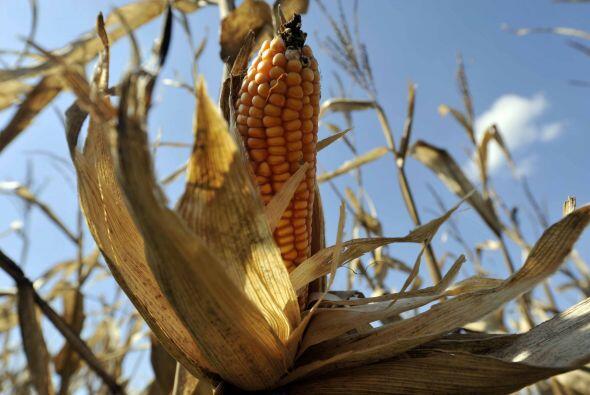 A saber de los campesinos lo que el gobierno quiere evitar es lo que pas...