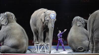 El gobernador de Nueva York firmó una ley que prohíbe el uso de elefante...