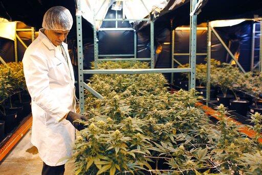 Marihuana Medicinal Puerto Rico