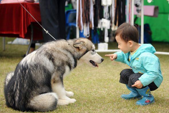 Mediante la incorporación de animales domésticos en las actividades regu...