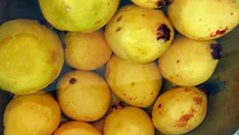 Agricultores hispanos cultivan frutos cuya importación está prohibida 86...