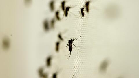 salud zika mosquitos