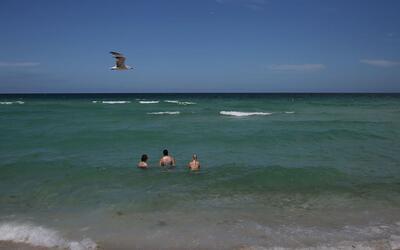 El pasado 11 de julio, un tiburó atacó a un bañista...