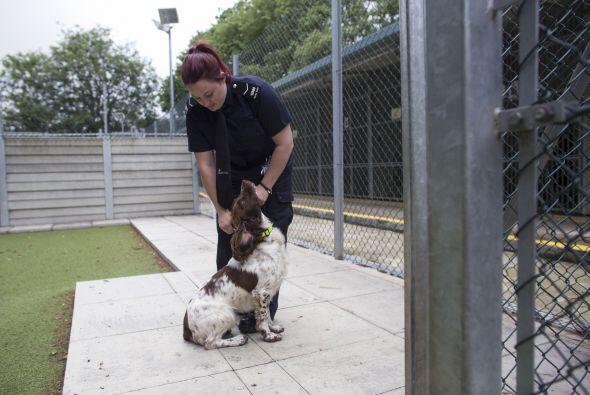 Actualmente la fuerza fronteriza tiene 74 perros altamente entrenados.