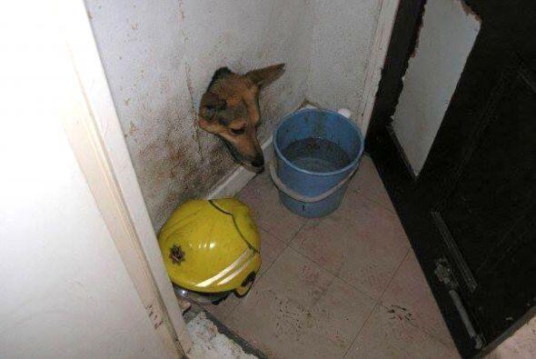 Su curiosidad lo llevó a atravesar el agujero, pero cuando intentó salir...