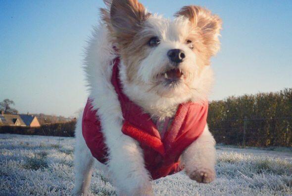 A esta perrita le encanta salir a correr, no le importa el tiempo climat...