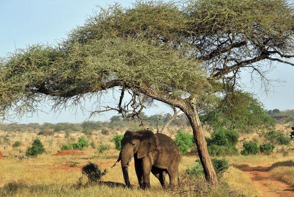 Sobre todo, para que vigilen a los mamíferos que habitan en el Parque Na...