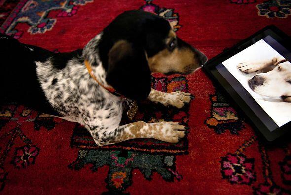 Dog TV,  es el primer canal de televisión para perros y sus creadores as...