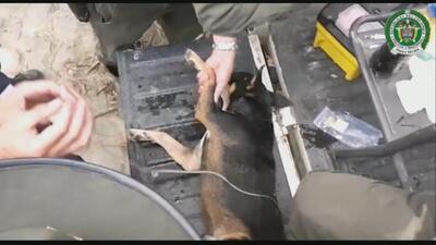 Policías en Colombia rescatan a un perro de morir ahogado