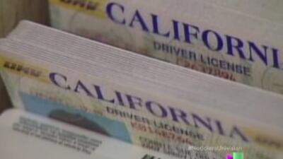 Se han entregado más de 200,000 licencias de manejo a inmigrantes indocu...