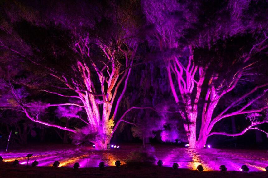 Morton Arboretum iluminado de Navidad