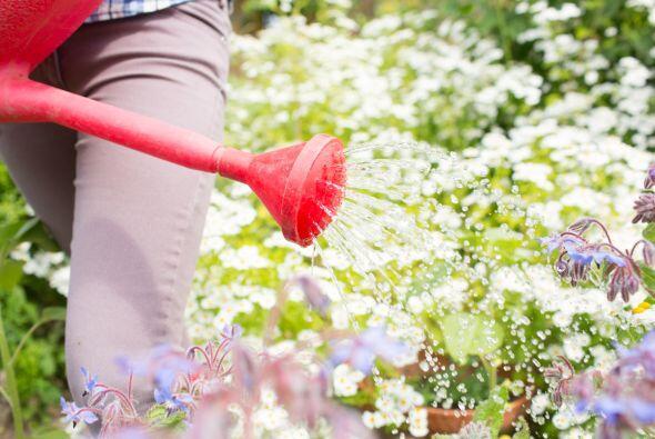 Para usar el agua como magneto energético y la purificación de la casa,...