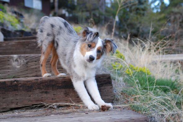 Subir y Bajar escaleras es una opción, mantener a tu perro durante un ti...