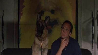 Dooley y su fiel perro Jerry Lewis pondrán al criminal tras las rejas