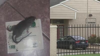 Madre denuncia que lleva 6 meses pidiendo ayuda por roedores que acechan su hogar