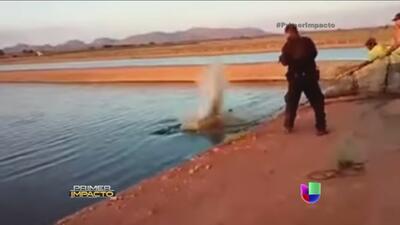 Secreto a Voces: Policía mata a tiros a cocodrilos en Sinaloa