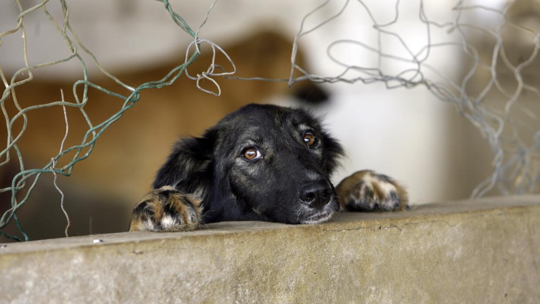 El FBI clasifica la crueldad animal igual que el homicidio GettyImages-1...