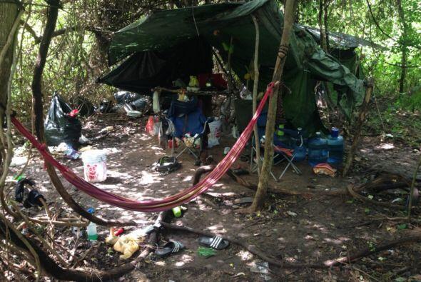 Agentes anti-narcóticos del área de Houston hallaron una plantación de u...