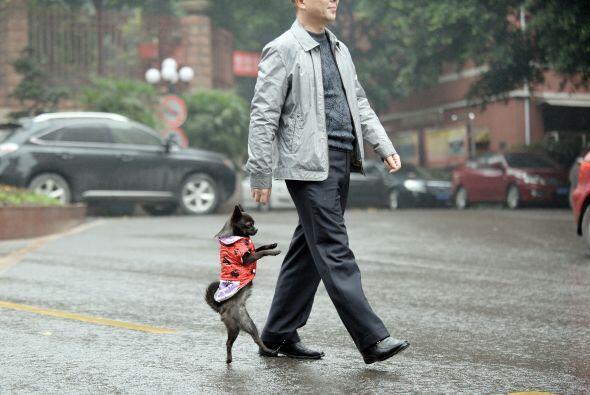 ¡Y cómo no asombrarse con esta graciosa exhibición de equilibrio canino!