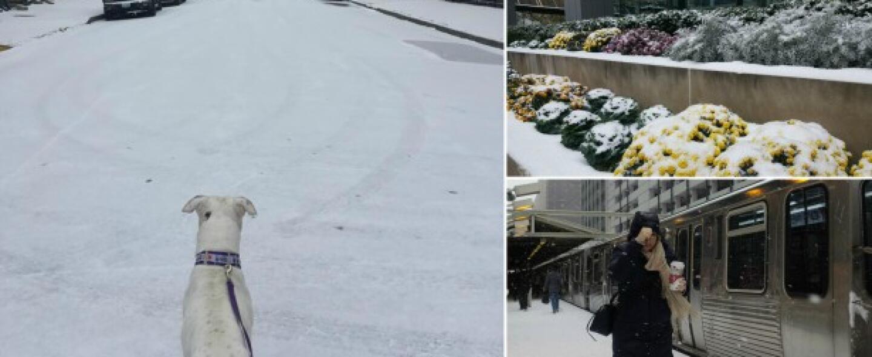 La Ciudad de los Vientos se pintó de blanco este viernes con la primera...