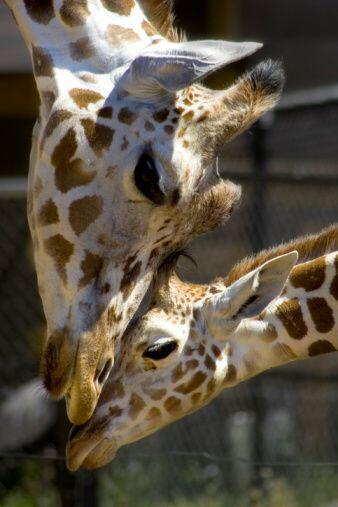 Pero también existe un zoológico lleno de especies maravil...