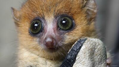 Island of Lemurs: Madagascar - Detrás de cámaras