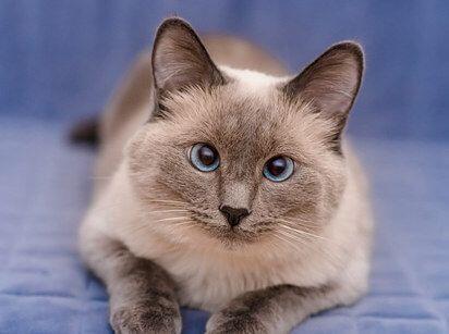 ¿Te gustan los gatos porque son criaturas independientes? Entonces los c...