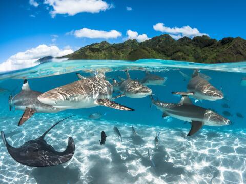 Honrar a los océanos es honrarnos a nosotros mismos  oceano.jpg