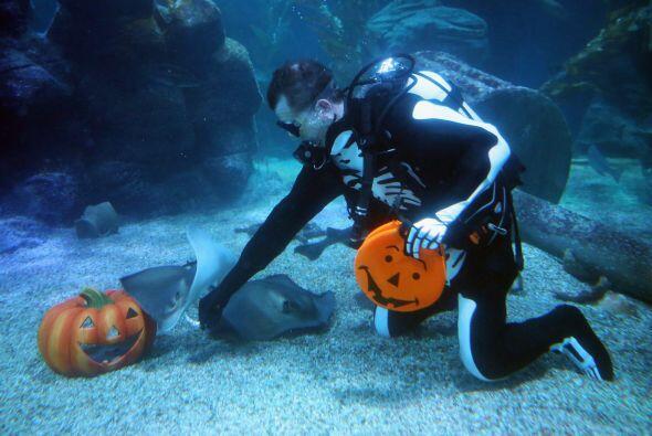 Y ¿por qué no? en el acuario, las mantarrayas también.