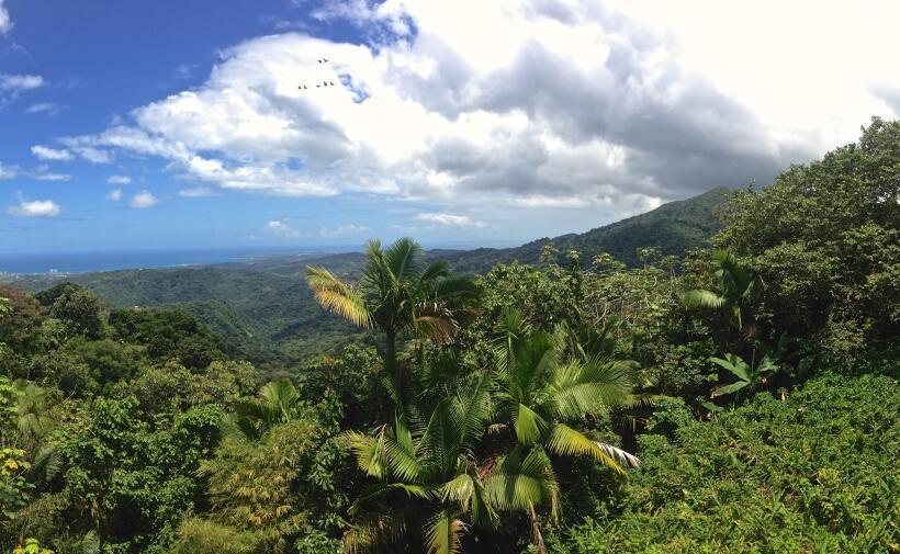 El Yunque es un lugar donde coexisten más de 240 especies de árboles nat...
