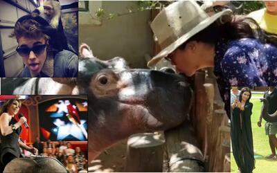 famosos y animales extremos