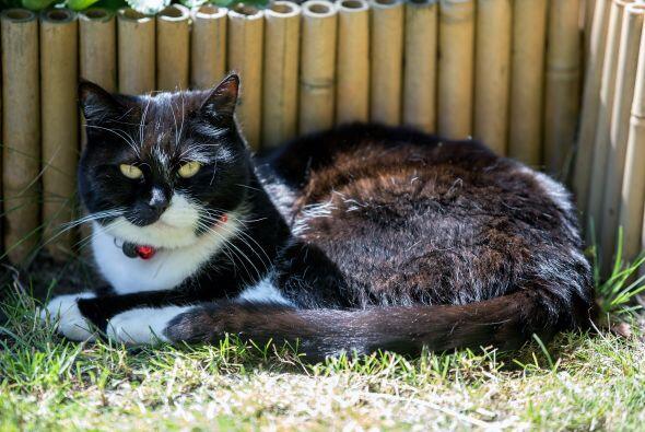 Milly Moo es el nombre de este minino que a su avanzada edad se preocupa...